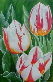 1. Jill Alexander -Canadian Tulips (002)