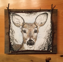 Deer Gaze 1: (sold) 2017, approx. 7″ x 7″ (not including board) graphite, watercolour pencil, & charcoal; mounted on barnboard, framed with birch saplings.