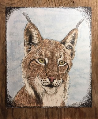 Lynx: 2017 8.5″ x 10″ (not including board) graphite & watercolour, mounted on barnboard, framed with maple sapling.