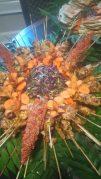almonte-syrian-food_dsc_0390-e1483139092225