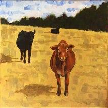 Curious Cows: 2019 12″ x 12″ acrylic on canvas