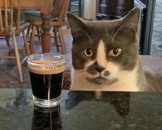 Espresso Cat